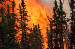 Forest Fire. Photo courtesy USGS